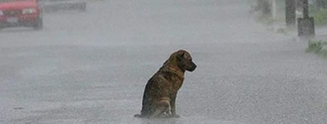 Treuer Hund wartet 10 Jahre auf totes Herrchen