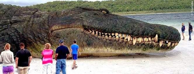 Unglaublich: Die größten Tiere der Welt im Video