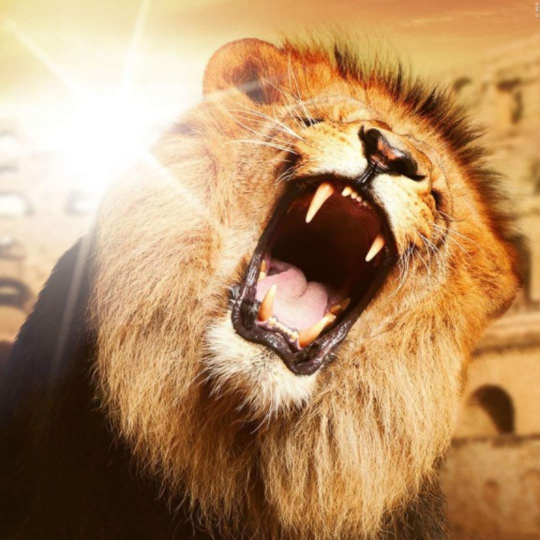 Die Höhle Der Löwen Download