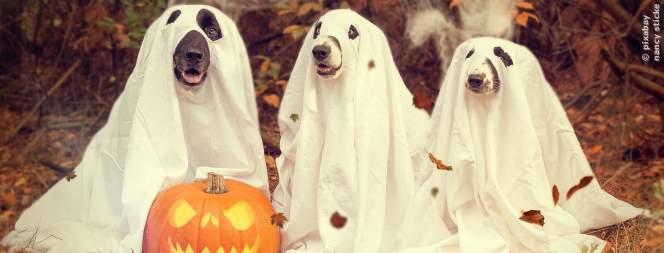 Halloween: Täglich schaurige Filme im Disney Channel