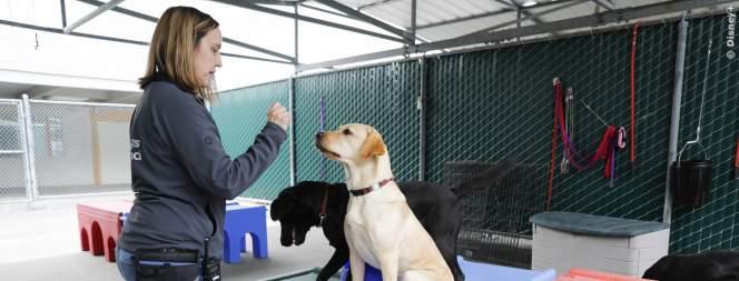 Hundeleben – Vom Welpen zum Blindenhund