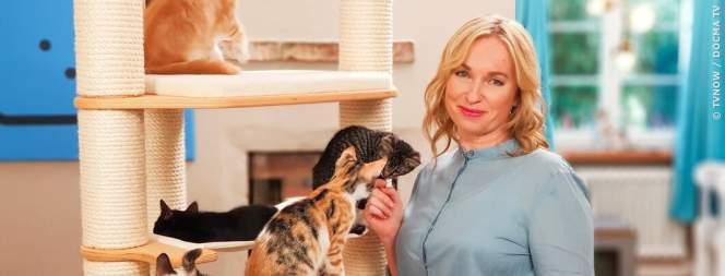 VOX startet die Katzen-Kita