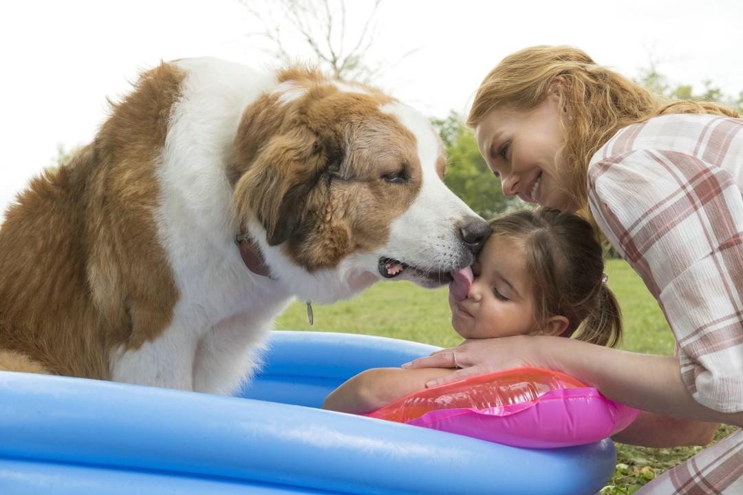 Bailey - Ein Hund Kehrt Zurück Trailer - Bild 1 von 8