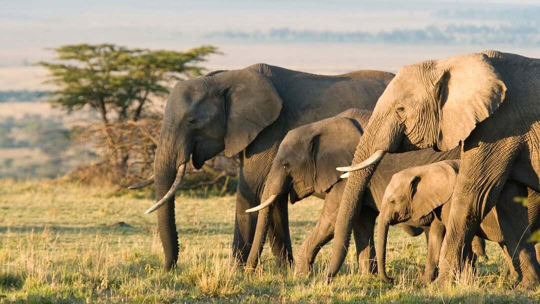 Elefanten Trailer - Bild 1 von 4