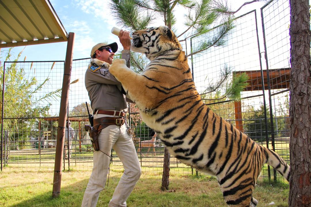 Tiger King - Großkatzen und ihre Raubtiere Trailer - Bild 1 von 7