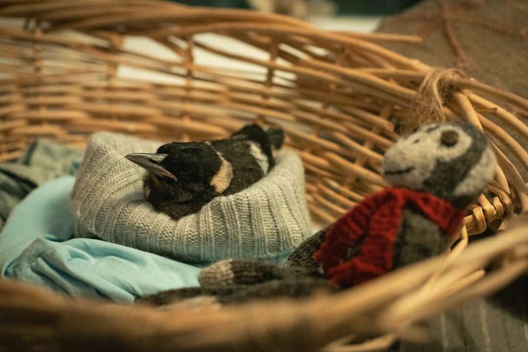 Bild zu Beflügelt - Ein Vogel namens Penguin Bloom